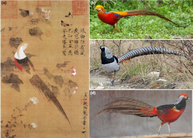 Peng - Hybrid Pheasant.emf
