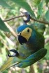 Psittaciformes (parrots and parakeets)