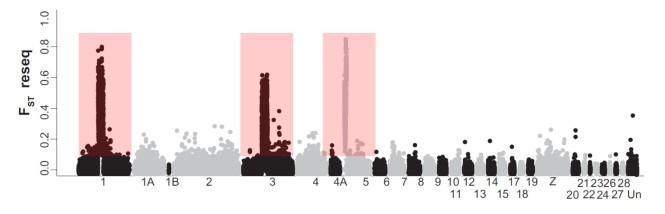 willow_warbler_genome