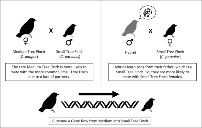 Tree Finches.jpg