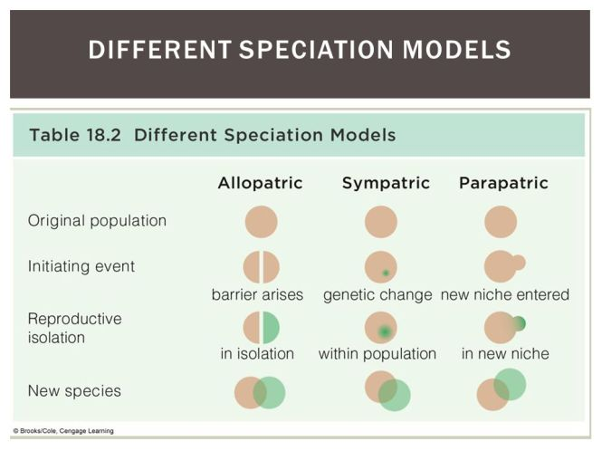 Different+Speciation+Models.jpg