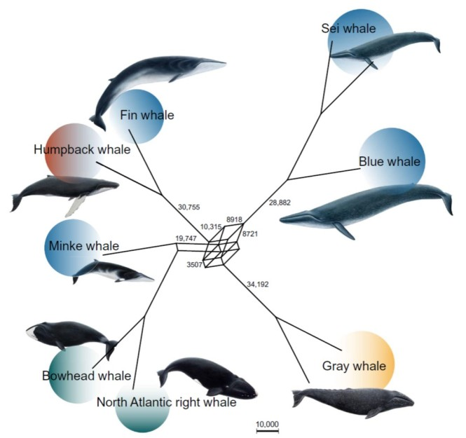 network whales.jpg