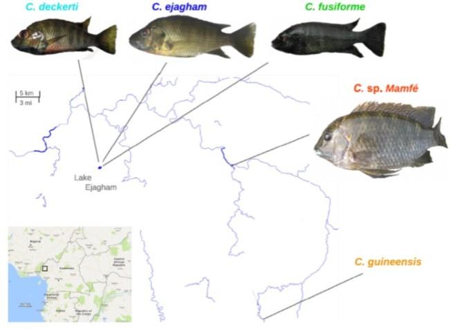 fish cameroon