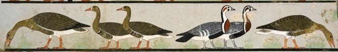 Meidum-geese.jpg