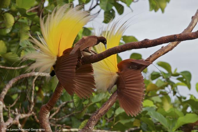 BirdsOfParadise-05._V389833666_.jpg
