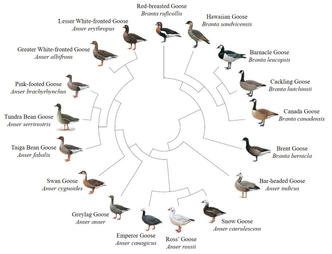 Goose Circle with names.jpg