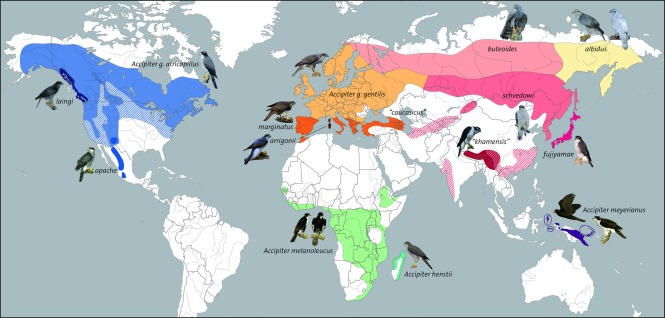 goshawk distribution.jpg