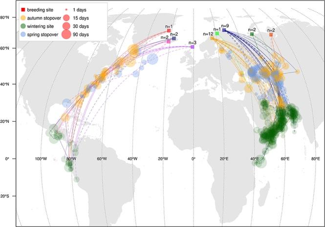 phalarope migration.jpg