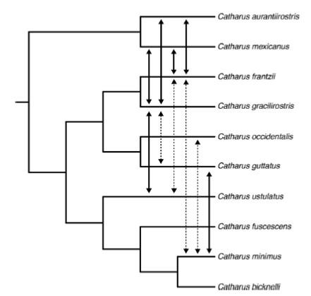 catharus_tree