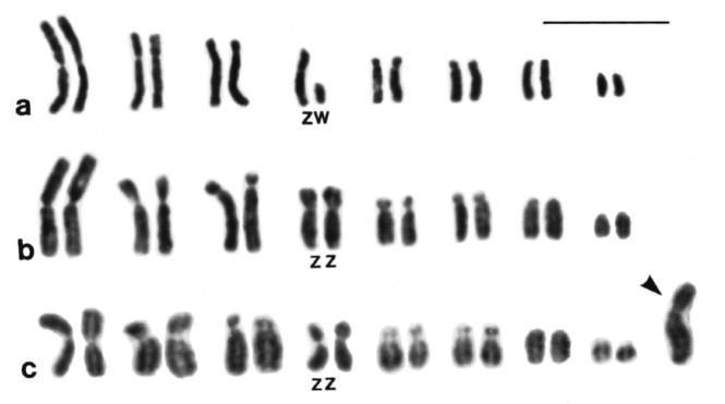 GRC_karyotype