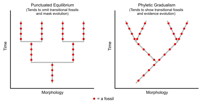 Fossils_in_Evolutionary_Biology