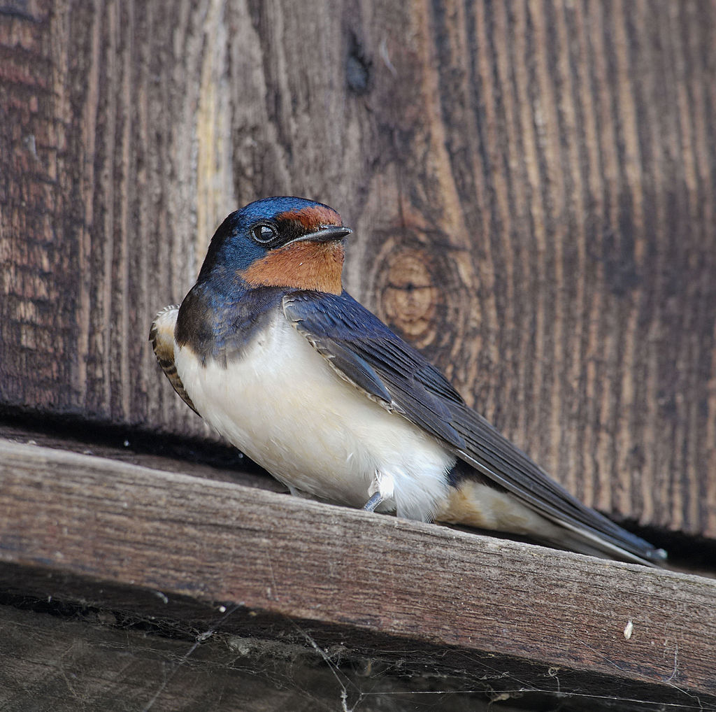 Different migration strategies contribute to reproductive ...