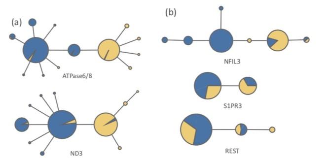 plover_networks