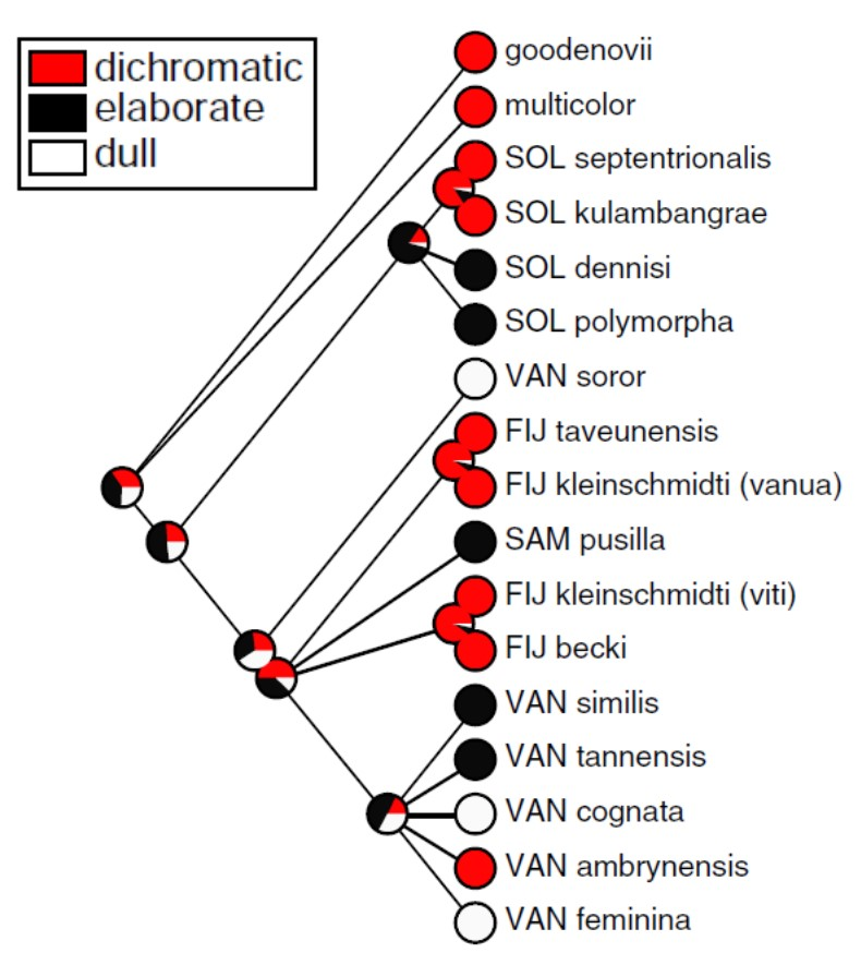 robin_phylogeny.png